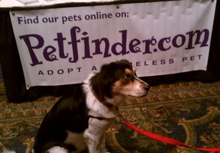 Chloe Petfinder dog