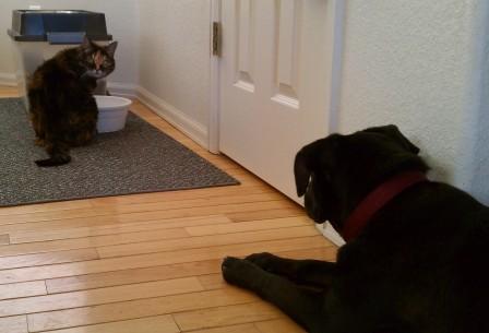 Here kitty kitty II
