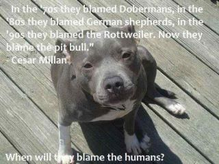 When will they blame humans