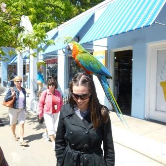 Parrot on my head