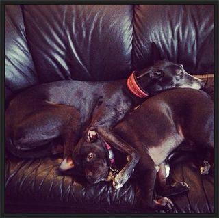 Twig and Onyx Snuggle