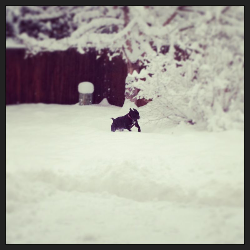 Onyx in snow