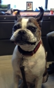 Hank's Smile