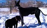 Twiggy and Onyx on a winter walk
